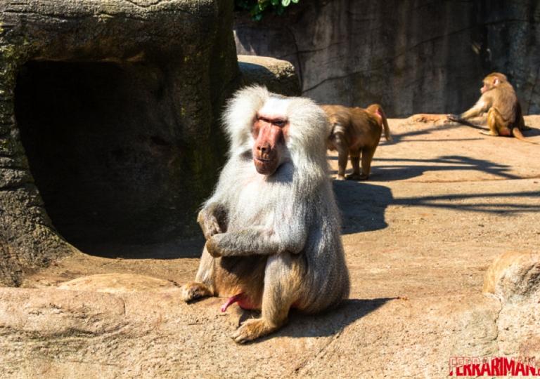 Zoo und Tierparks